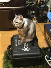 ネコの日〜(≧∇≦)