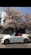 さらば桜(T ^ T)