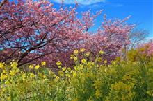 河津桜を見に一泊ドライブ旅行