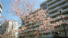 春が近いのかもしれませんね(^^)