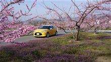 DS3で行く山梨桜と桃花堪能ドライブ2014
