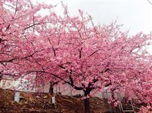 春ですね🎵