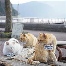 1諭吉もって猫旅へ!