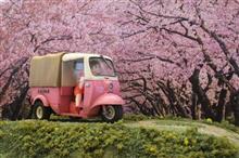 春ですね、フチ子さん。 ~Sakura and Fuchiko~