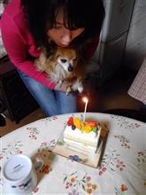 ロンチーの誕生日。