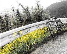 春の花を愛でた今日のサイクリング。