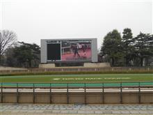 24年ぶりに東京競馬場に行く
