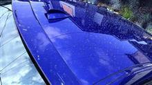 班目 花粉が飛んで雨が降ると