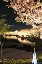 桜とイルミネーション