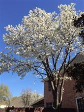 春一番 Hailの洗礼