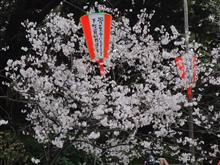 上野公園へ花見散歩