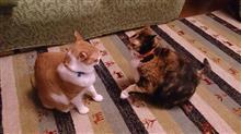 猫の相撲見て思った事