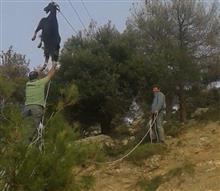 なぜかヤギが電線に絡まる事故が発生!懸命に救出した結果!