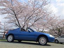 桜の開花早すぎ!