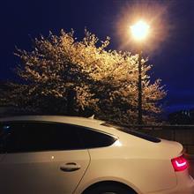 夜桜撮影audi A5SB