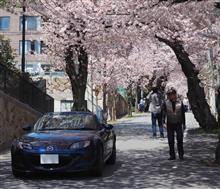 桜ドライブin兵庫県