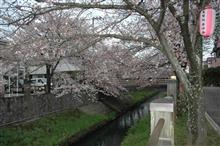 今年も咲きました(桜)