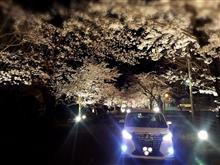 秩父長瀞の夜桜情報