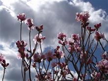 すっかり・・・春なので・・・
