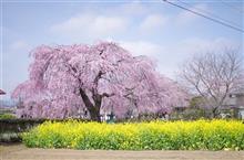 春を撮りに