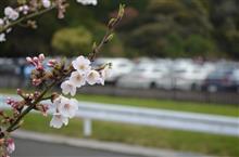 2016スタートから桜開花まで♪