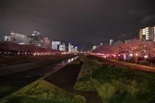 水戸の夜桜:茨城出張最終日