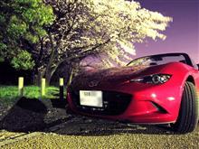 近所で桜 Part2