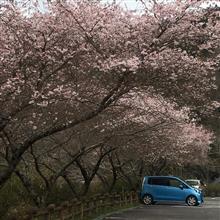 🌸桜桜桜🌸