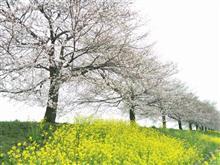 桜と桜えびを求めて・・・