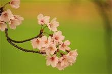 桜並木で撮影会 その1