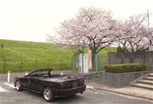 車検と桜と・・・