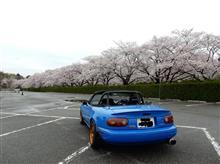 桜満開 ロードスター記念撮影