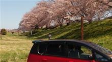 桜祭りはまだですが?
