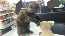 増猫計画終了?みんな兄弟♪猫の毛色を楽しむ(*^^)v (猫ブログ)
