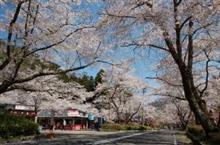 4月10日桜TRG