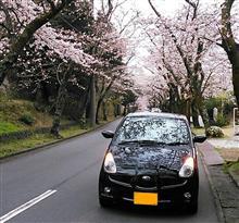 桜散歩 パ―卜2