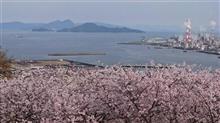 桜・・・・満開!(^^)!