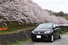 桜の季節とマイカーの写真