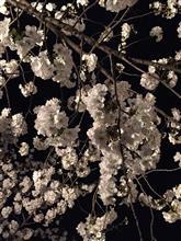 春の夢の如し