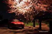 桜が散る前に・・・