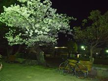夜桜とアンカーRS8