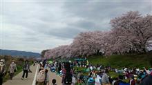 京都に桜見に行きました☆