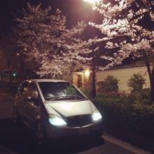 夜桜とのコラボを撮りに(^o^)
