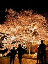 今年最後の桜撮り(^^)