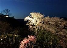 奈良・吉野の桜(夜桜)ツアー