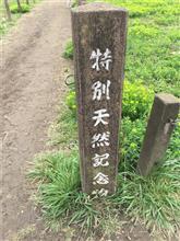 「田島ヶ原サクラソウ自生地」とサクラ