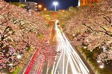 日立平和通り(夜桜)