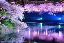 千鳥ヶ淵の夜桜散策