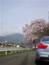 バンド練習に行く前の横浜町田IC近くの桜並木にて(2)