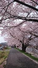 一目千本桜